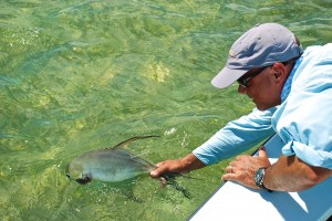 Permit are caught on fly, tagged and released in the Del Brown Permit Tournament