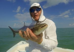 A juvenile cobia is caught and released in the Gulf of Mexico